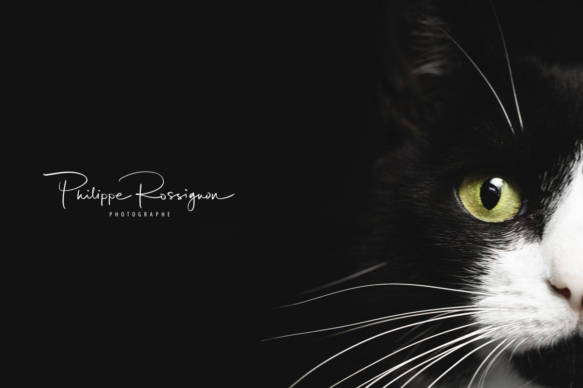 Photo n°6 : Photographe pour votre animal de compagnie